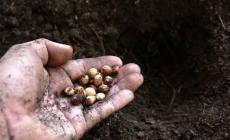 Seeds Life in Hands